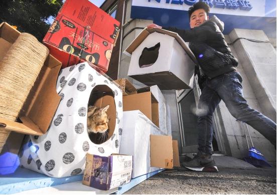 """暖心!菜鸟驿站站长用快递盒,为流浪猫打造""""猫别墅""""遮风挡雨"""